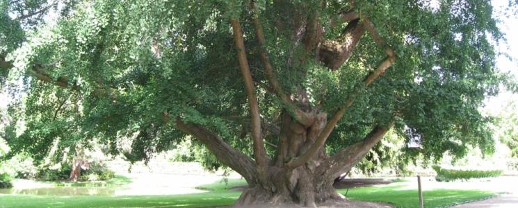 Le jardin botanique de tours parc et jardin france for Jardin botanique tours