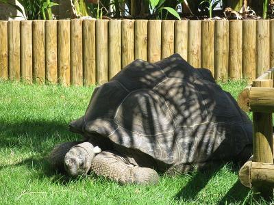 M nagerie du jardin des plantes zoo france paris visiter et voir - Menagerie du jardin des plantes tarif ...